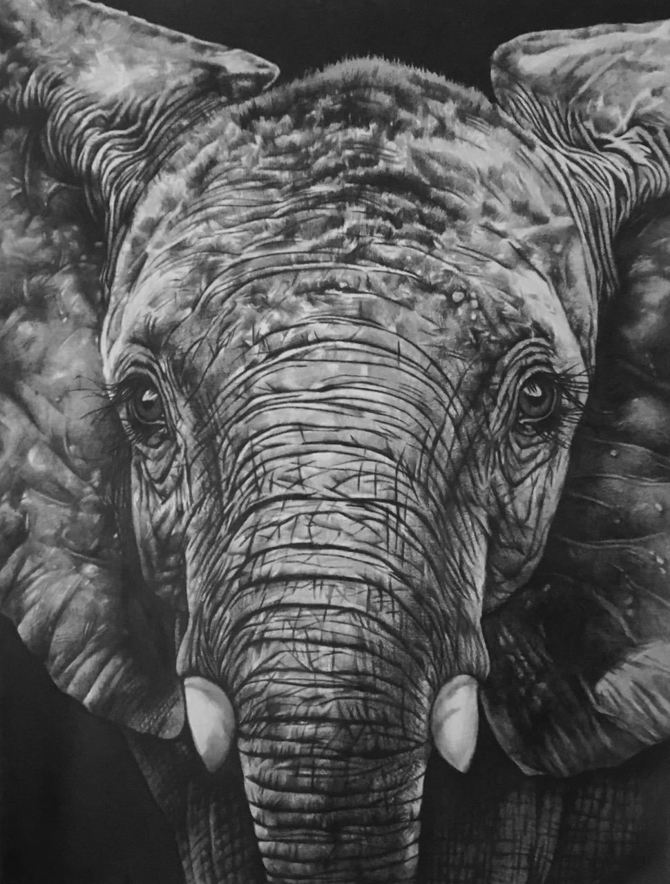 Wz 1077 - Mojo --- Bleistiftzeichnung auf Lwd | 145 x 110 cm, 2016